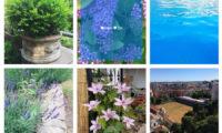 Instagram Gallery Download Free WordPress Plugin