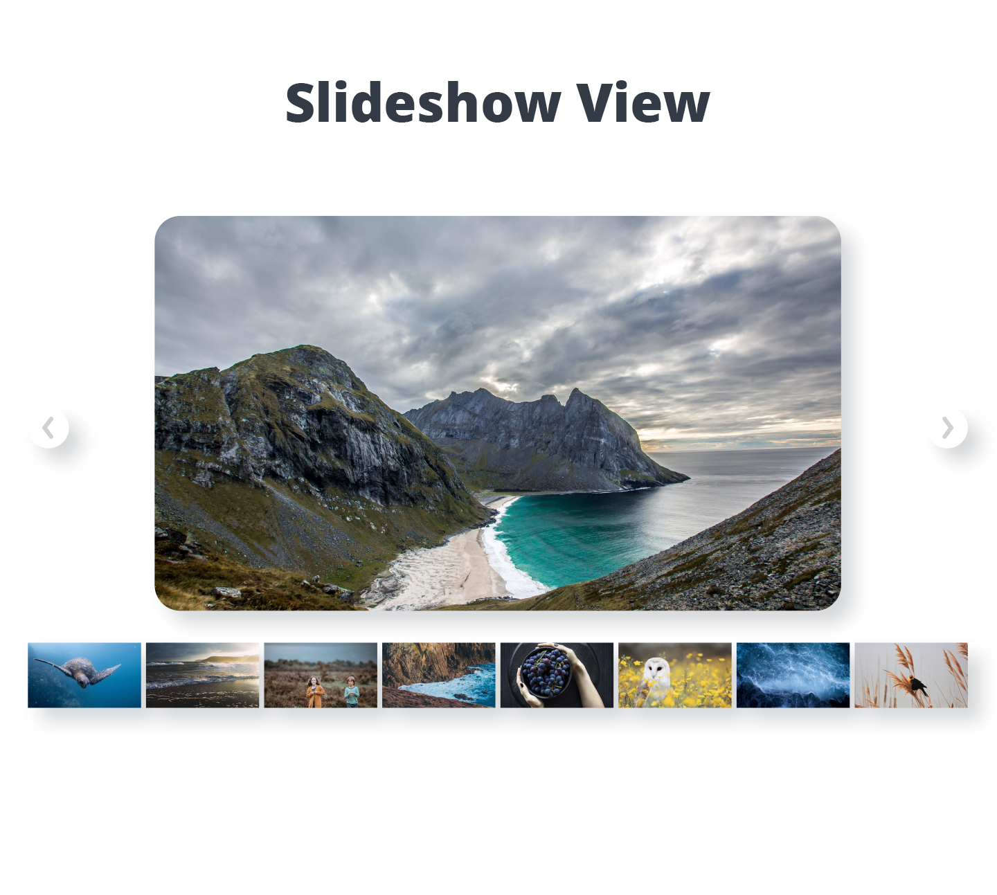 Photo Gallery by 10Web – Responsive Image Gallery Download Free Wordpress Plugin 1