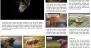 News Site Download Free WordPress Theme