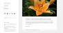 Speculate Download Free WordPress Theme