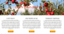 FarmLight Download Free WordPress Theme