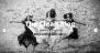 The Clean Blog Download Free WordPress Theme